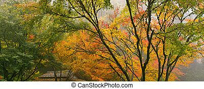 おおい, かえで, 日本語, 木, 秋