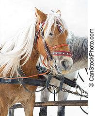 そり, 馬, 輸送, 観光名所, 選択肢, 冬