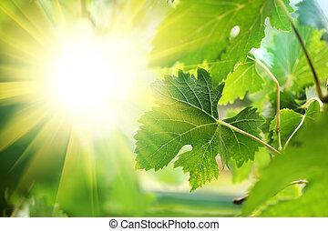 によって, 葉, 太陽, 情報のルート, 照ること
