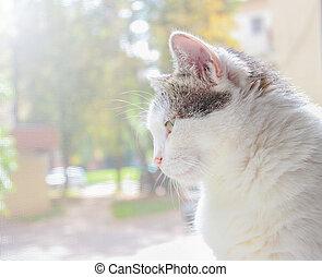 の上, ねこ, 窓, 顔つき, から, よく晴れた日, white-gray, 家, 成人, 終わり