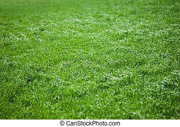 の上, 新たに, 草, 終わり, 春