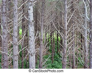 はげ, 木の幹