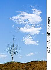 はげ, 木, 雲