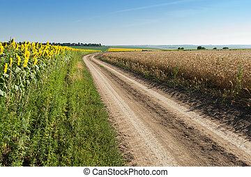 ひまわり, 小麦, 側, 道