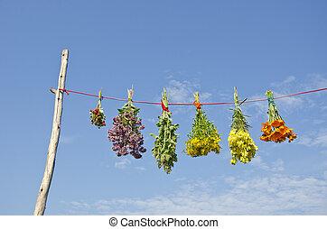 ひも, ハーブ, 医学, 空, 様々, 束, 花