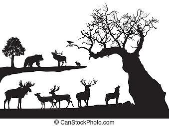 ふしだらけである, 木, 野生生物, 隔離された