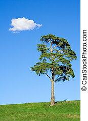 もみの 木