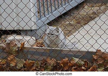 わずかしか, 子ネコ, 金属, 灰色, の後ろ, 噛み合いなさい, 座る, フェンス