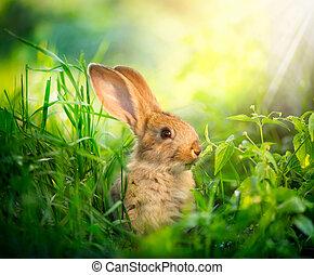 わずかしか, 牧草地, rabbit., イースター, 芸術, かわいい, うさぎ, デザイン