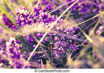 わずかしか, 花, 型, 紫色の背景