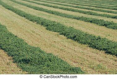 アルファルファ, 干し草, 横列