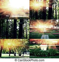 イメージ, crossprocessed, 日没, コレクション, 木