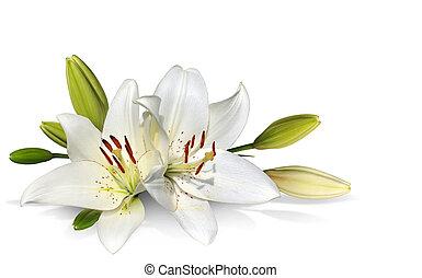 イースター, 白い花, ユリ
