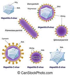 ウイルス, eps10, 肝炎, 比較