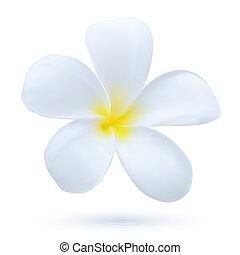 エキゾチックな植物, 花, 芸術, 花, ハワイ, frangipani, トロピカル, ベクトル, plumeria, 白