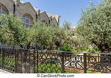 エルサレム, イスラエル, gethsemane, 庭