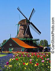 オランダ, 風車