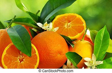 オレンジの花, 成果