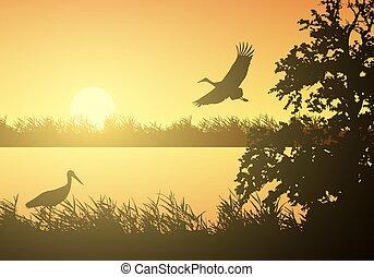 オレンジ, 上昇, 風景, ベクトル, 下に, イラスト, 湿地, 川, 現実的, 表面, birds., 朝, 湖, ∥あるいは∥, 太陽, コウノトリ, 空の飛行, 水