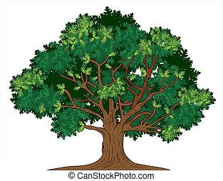 オーク, ベクトル, 木