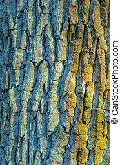 オーク, 樹皮, 古い木