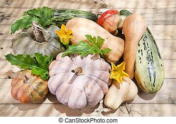 カボチャ, 収穫, 季節, 秋