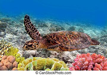 カメ, 水泳, 緑, 海, 海洋