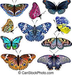 カラフルである, butterflies., 現実的, 隔離された, セット