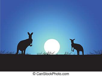 カンガルー, 背景, 日没