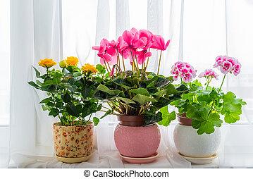カーテン, 花, 窓台, 3, 立ちなさい, 背景, potted