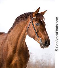 クリ, 肖像画, 馬, winter.