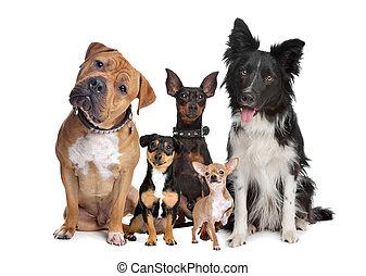 グループ, 5, 犬
