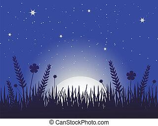 ケシ, 牧草地, 夜