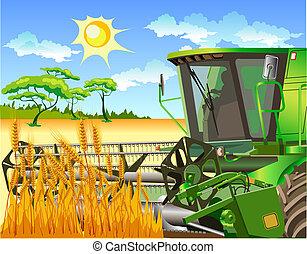 コンバイン, フィールド, 小麦