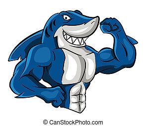 サメ, 筋肉