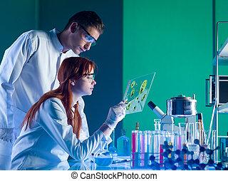 サンプル, 薬, 科学者, 勉強