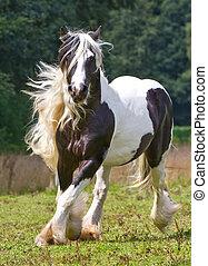 ジプシー, 馬