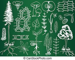 スケッチ, 植物学, 生物学, 学校, -, 植物, イラスト, 板