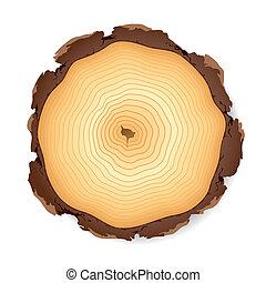 セクション, 木製である, 交差点