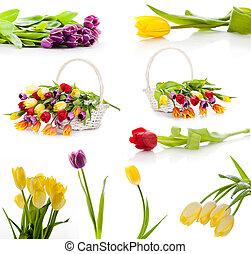 セット, カラフルである, チューリップ, 隔離された, flowers., 背景, 春, 新たに, 白