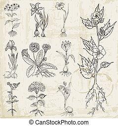 セット, 型, -, 手, ベクトル, 引かれる, 花