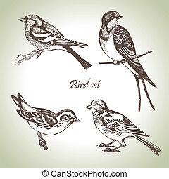 セット, hand-drawn, 鳥, イラスト