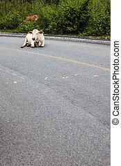 タイ, 道, 北, 牛