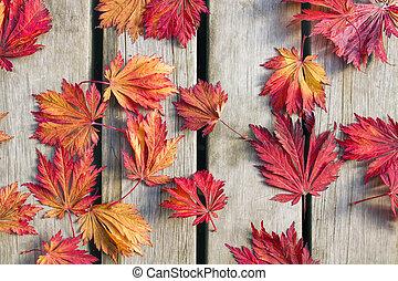 デッキ, 葉, 木, 日本語, 木, かえで