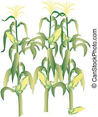 トウモロコシトウモロコシの穂軸, イラスト, 茎