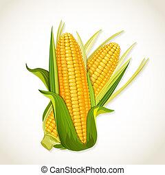 トウモロコシトウモロコシの穂軸, 熟した