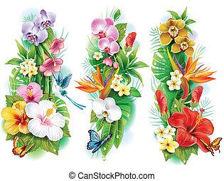 トロピカル, 葉, 花, 整理
