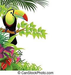 トロピカル, toucan, 森林, 鳥