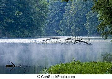 ハンガリー, トロピカル, 木, 湖, 穏やかである, 水, 明るい, 屋外で, 植物, 平和, 抽象的, impassable, 景色, 日当たりが良い, 自然, アル中, 日, 背景, 群葉, 霧, 緑, 春, ブランチ, マジック, 自然, 有機体である, 川, 環境, 成長, きれいにしなさい, 日光, 反射, 波, 野生, 新たに, 草, 美しさ, 葉, 滝, 森林, 森, 植物学, 白熱, 美しい, 夏
