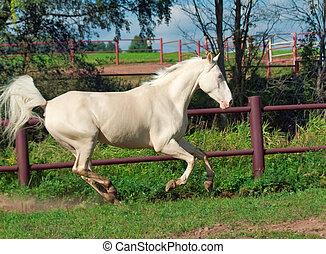 パドック, 動くこと, 馬, 美しい